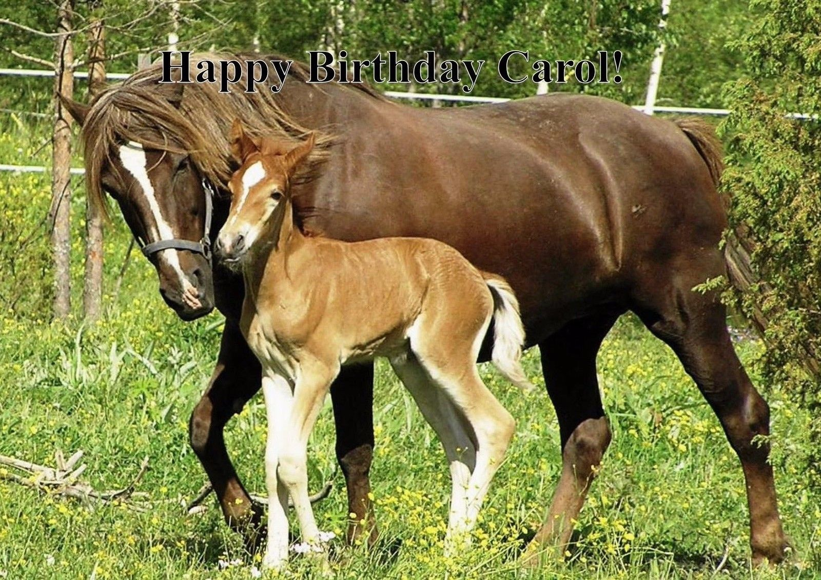 Horse foal personalised printed birthday cards cute animals horses horse foal personalised printed birthday cards bookmarktalkfo Images