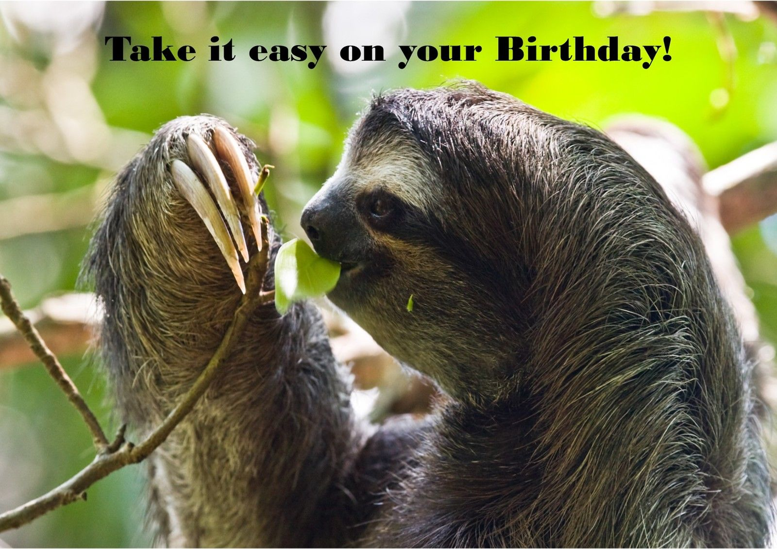 Sloth Cute Animals Personalised Printed Birthday Cards Funny